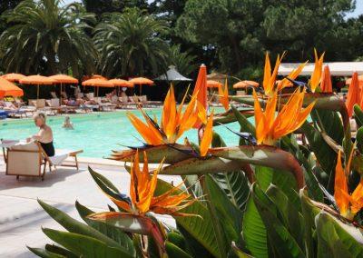 szardinia_hotel_3_csillagos_eszaki_part_hotel_oasis_alghero_medence_strelitzia_viragokkal