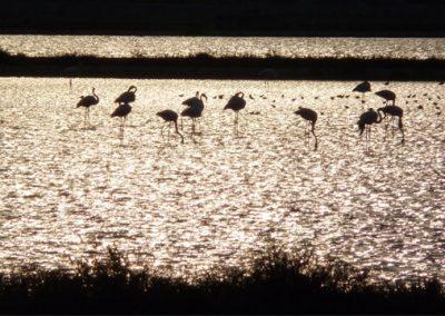 szardinia_sziget_fovarosa_csavargasok_cagliariban_flamingo_rezervatum
