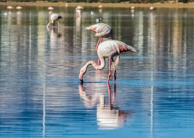 szardinia_sziget_fovarosa_csavargasok_cagliariban_flamingo_rezervatum1