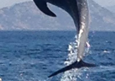 delfines10