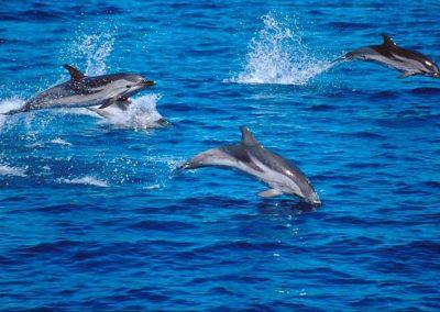 delfines3