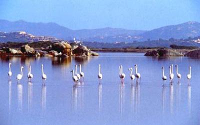 szardinia_apartman_eszaki_part_residence_stella_marina_san_teodoro_flamingok