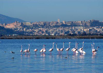 szardinia_latnivalok_cagliari_flamingok